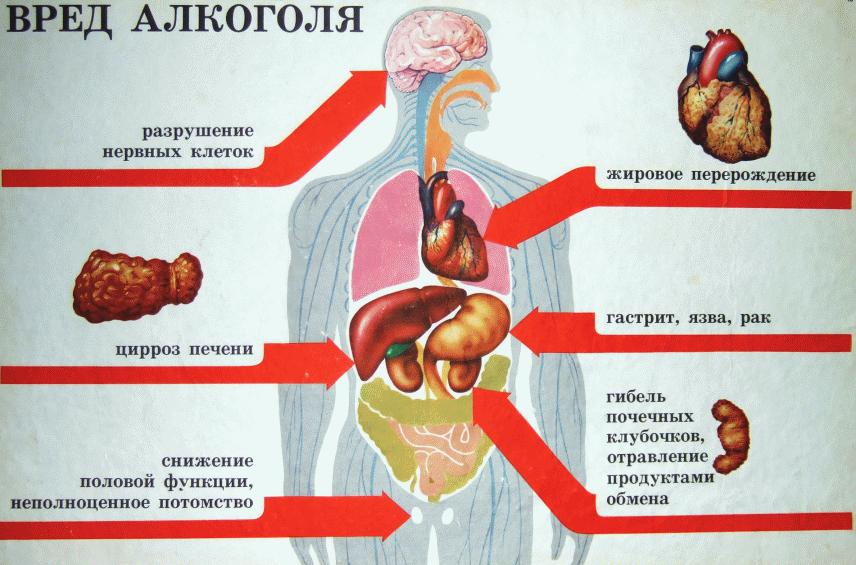 вред спирта на организм
